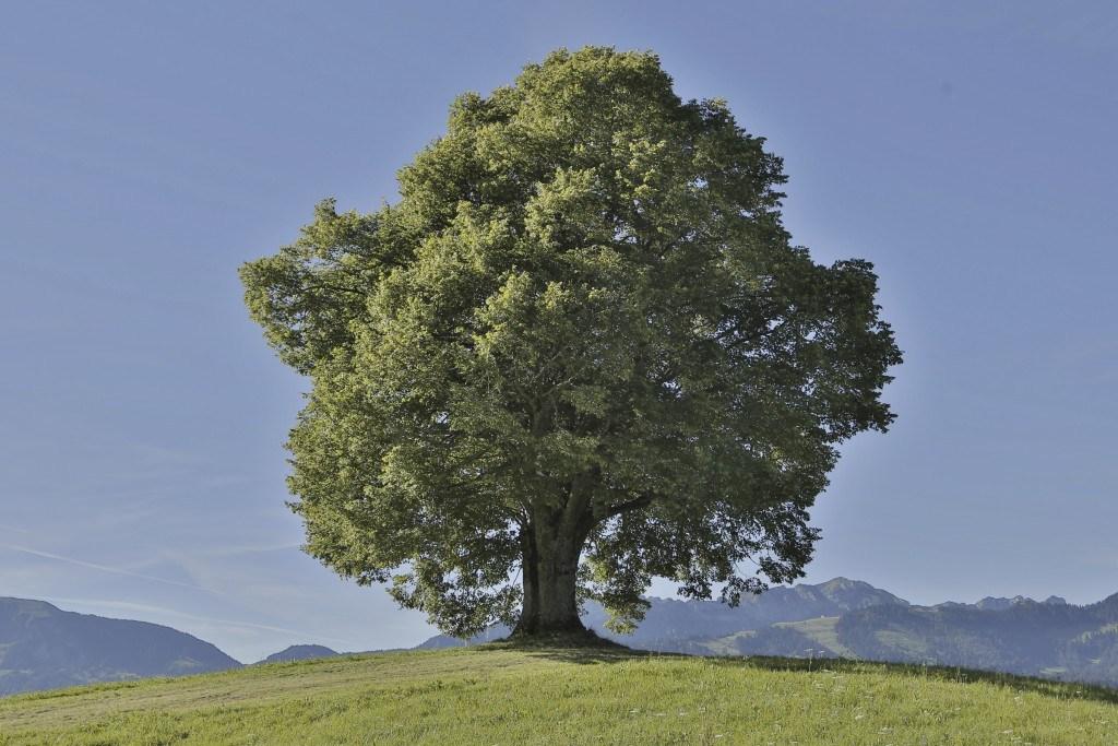 Sustainibility Blog