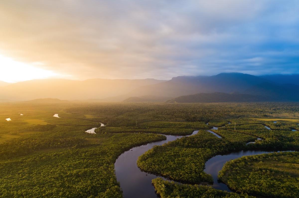 Urgence climatique et forêts en danger