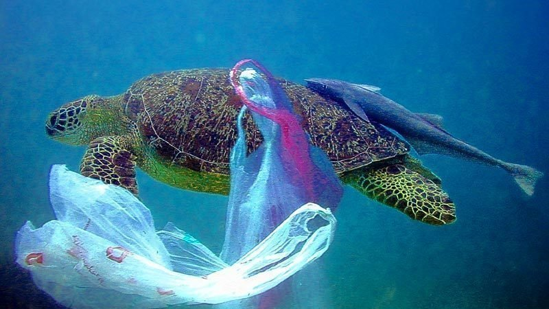 New Zealand announces nationwide plastic bag ban