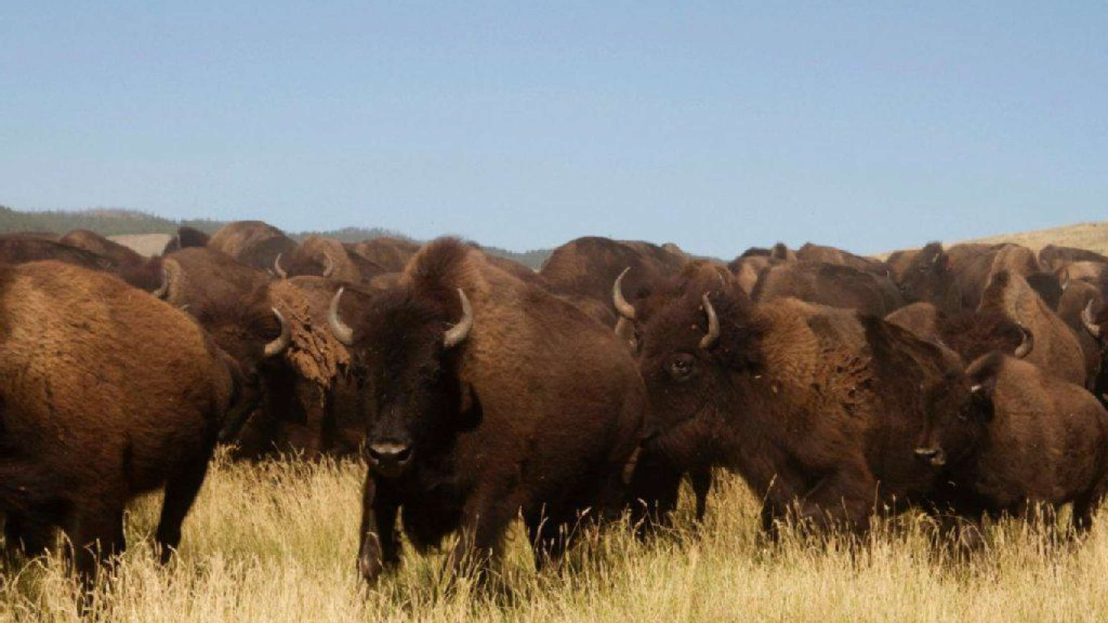 Die Erde wird sich reinigen. Ein Interview mit John Fire Lame Deer der Mnikowoju-Lakota-Indianer