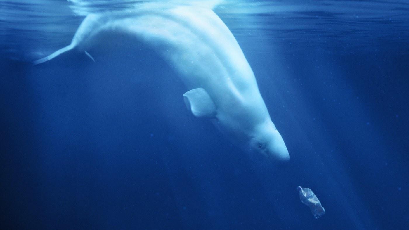 A plastic Ocean – Der Wandel beginnt mit uns