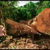 Cri d'alarm du peuple indigène Surui