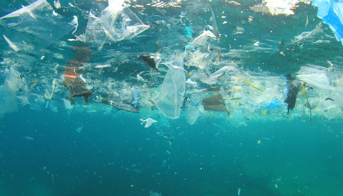 By 2050, our oceans will have more plastic trash than fish. Avaaz calls for petition.