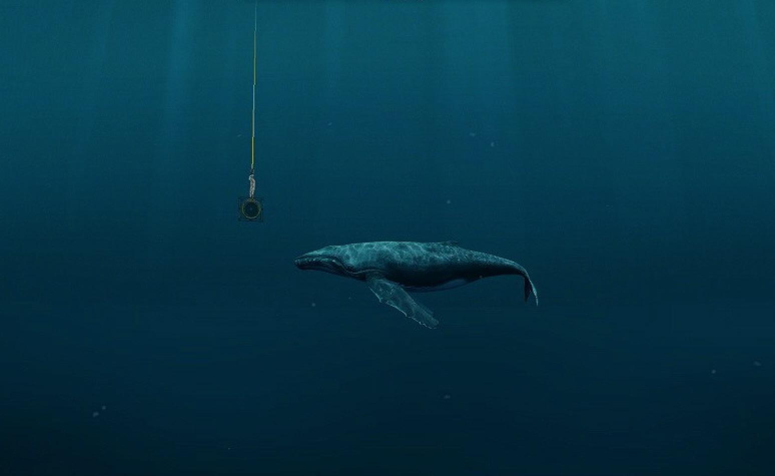 Das Wal Lied.. Eine Einladung zu sehen und zu fühlen