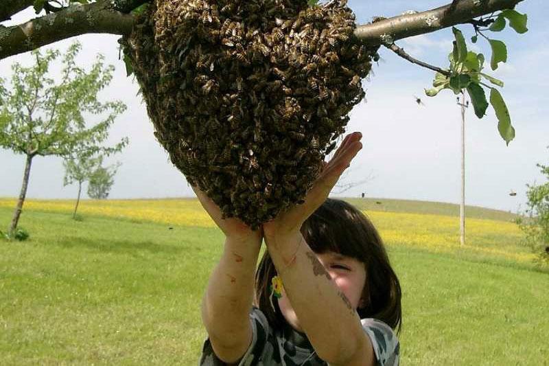 Demokratie bei den Bienen