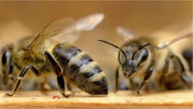 Wertfreies Geschehen im Bienenstock