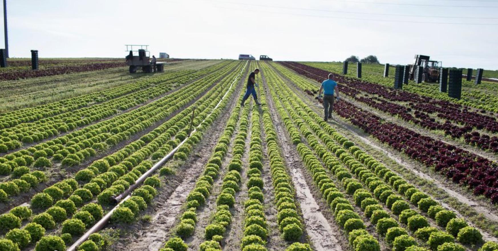 Le canton de Neuchâtel en Suisse devrait passer au bio ou biodynamique avec ses mille hectares de terres