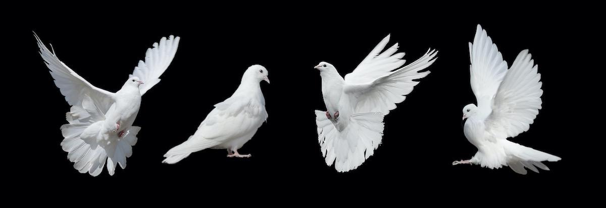Die Strategie der friedlichen Umwälzung von Christoph Pfluger. Eine Antwort auf die Machtfrage