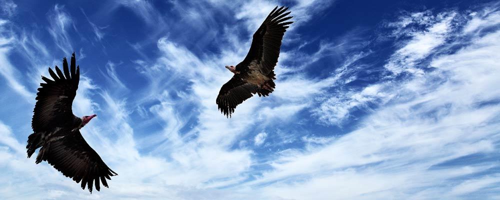 Die Zeit ist gekommen ist, wo der Kondor, das Herz und der Adler, der Verstand, zusammen aufsteigen