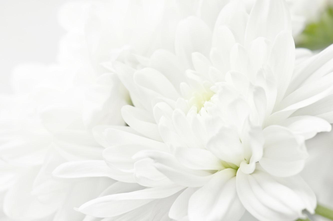 Wenn Reinheit, Schönheit und Einfachheit dein Herz so tief berühren…..