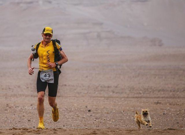 Gobi – the dog of the marathon