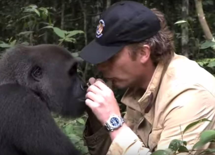 Das umwerfendste Gorilla Video