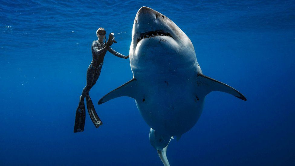 Anna Breytenbach communicates with great white sharks