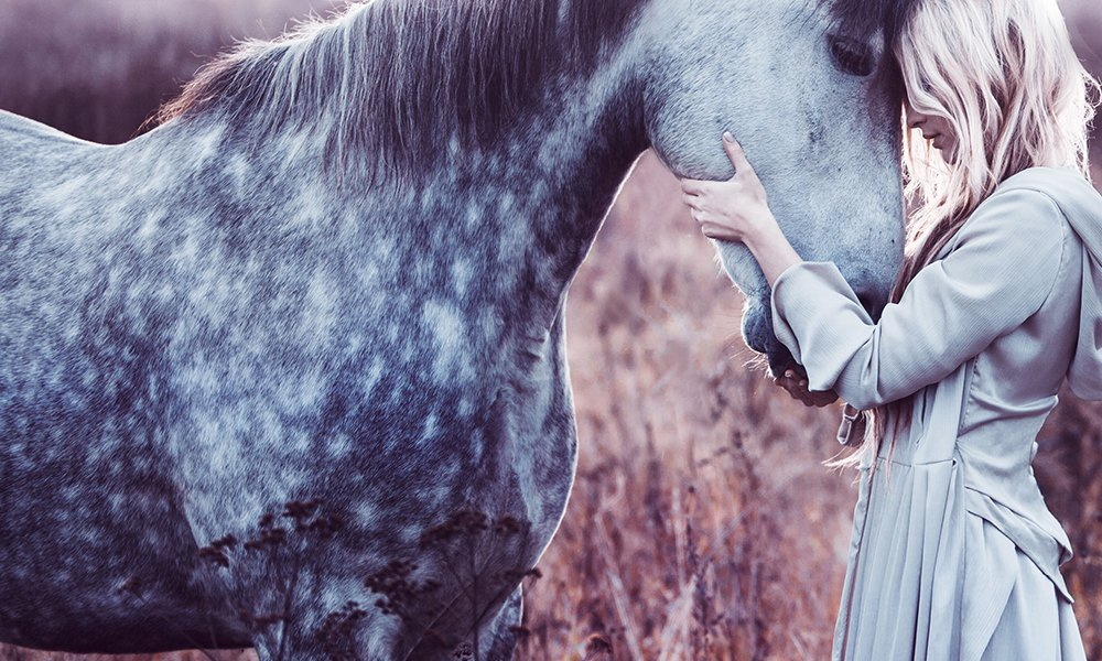 Study shows that horses understand our emotions and remember us deeply