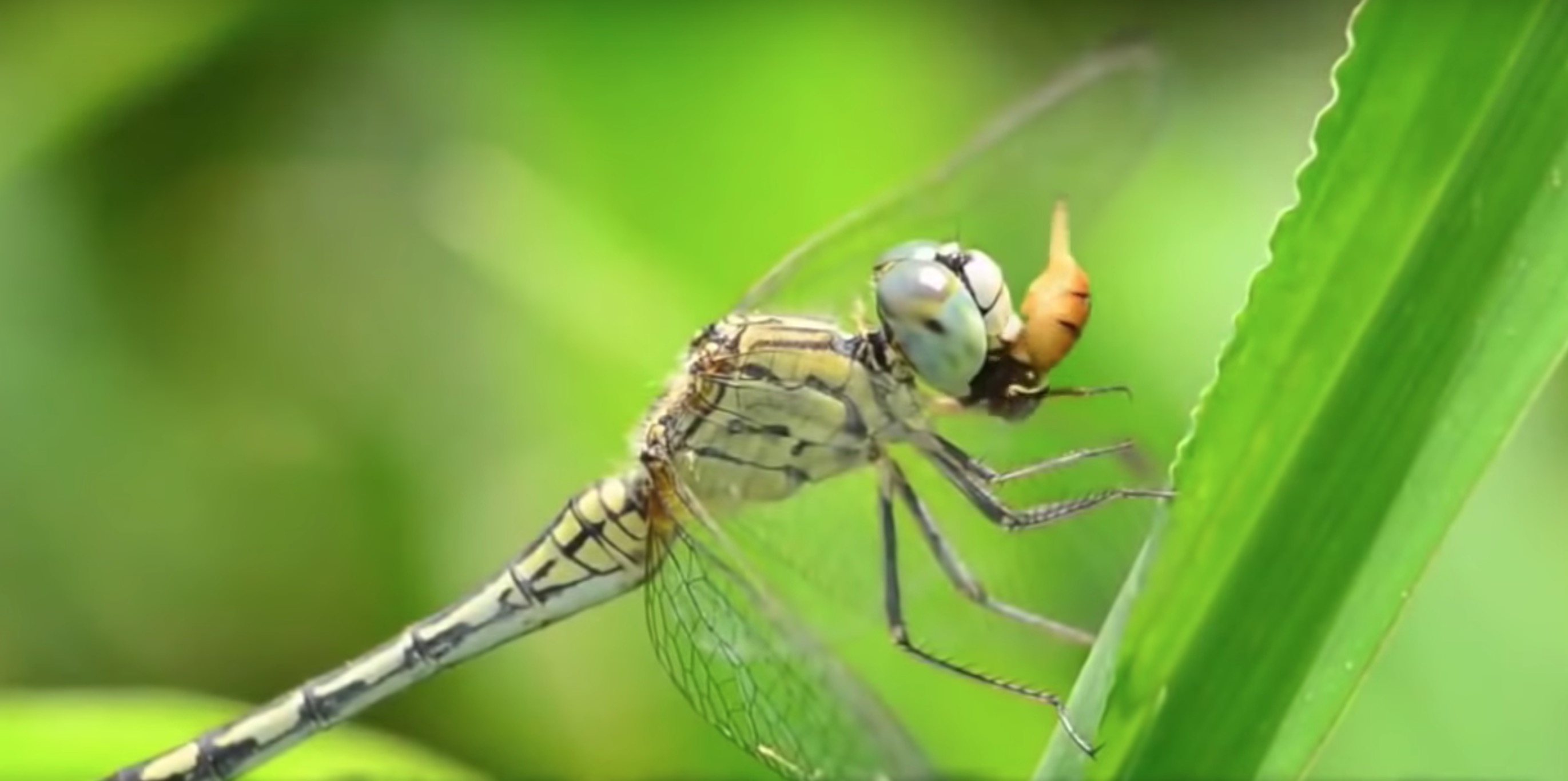 A powerful documentary about 5G, birds, bees and humanity