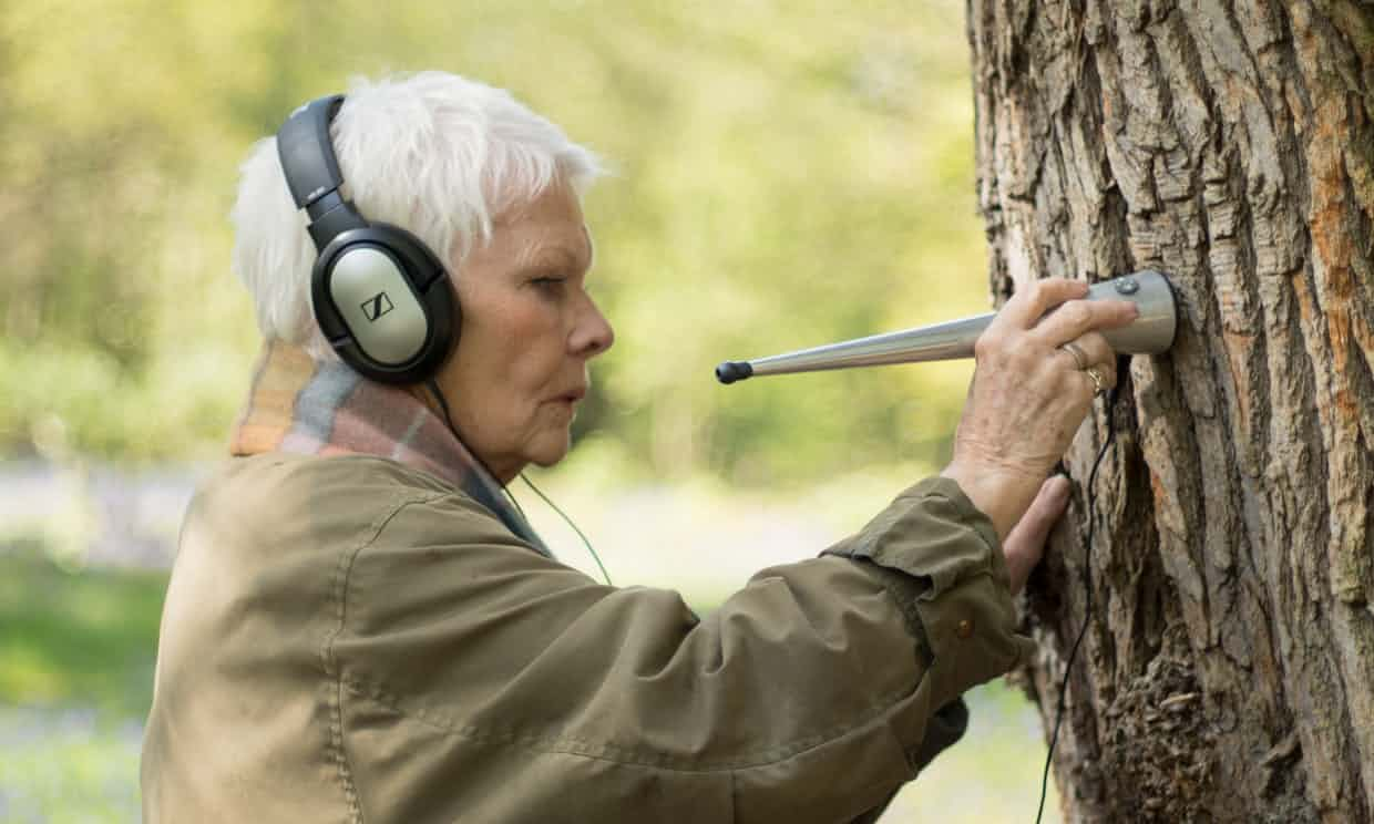 Judy Dench: The actor makes fascinating discoveries about how trees communicate…