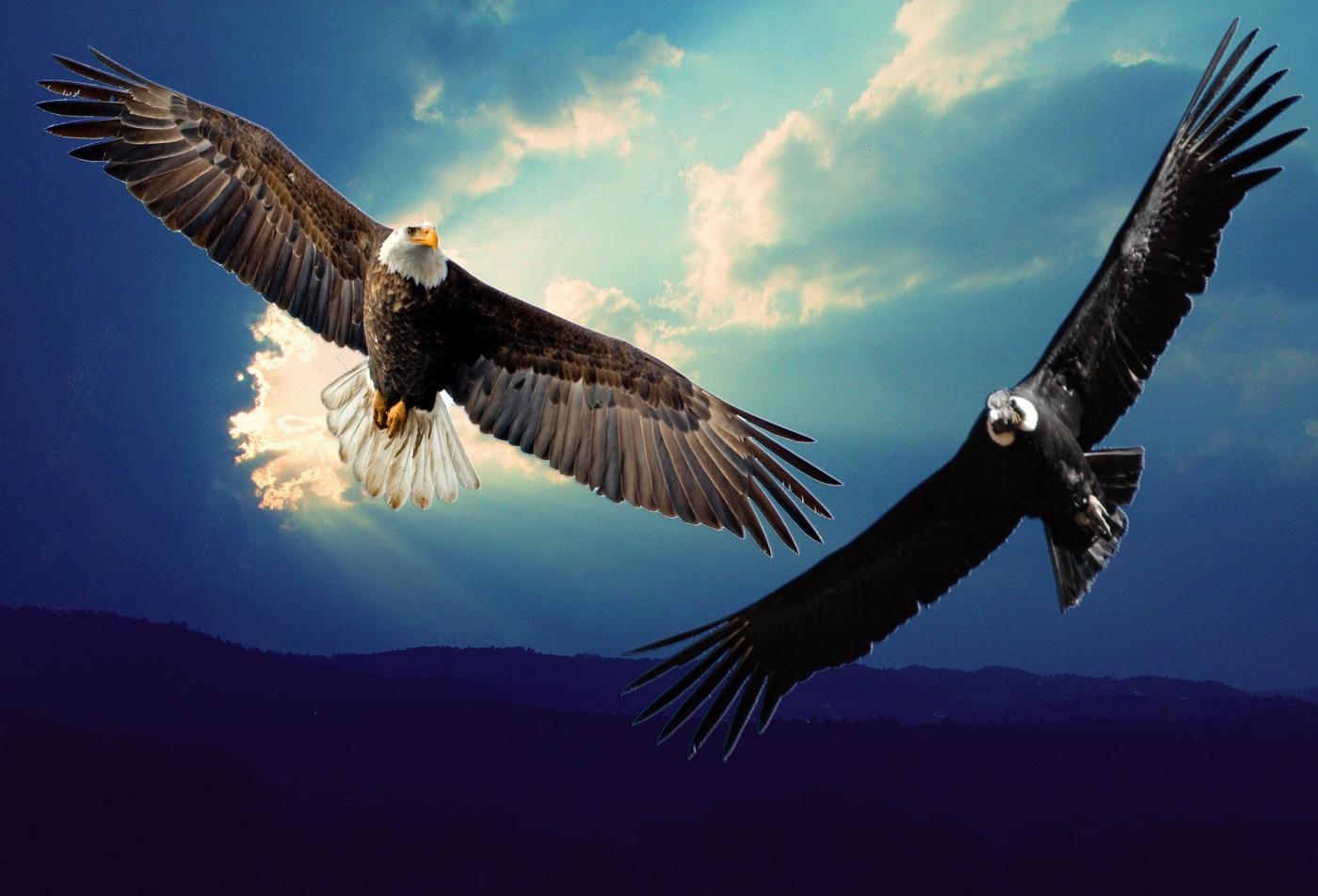 Die Prophezeiung vom Adler und Kondor. Der Adler muss sehen, der Kondor sich erheben.