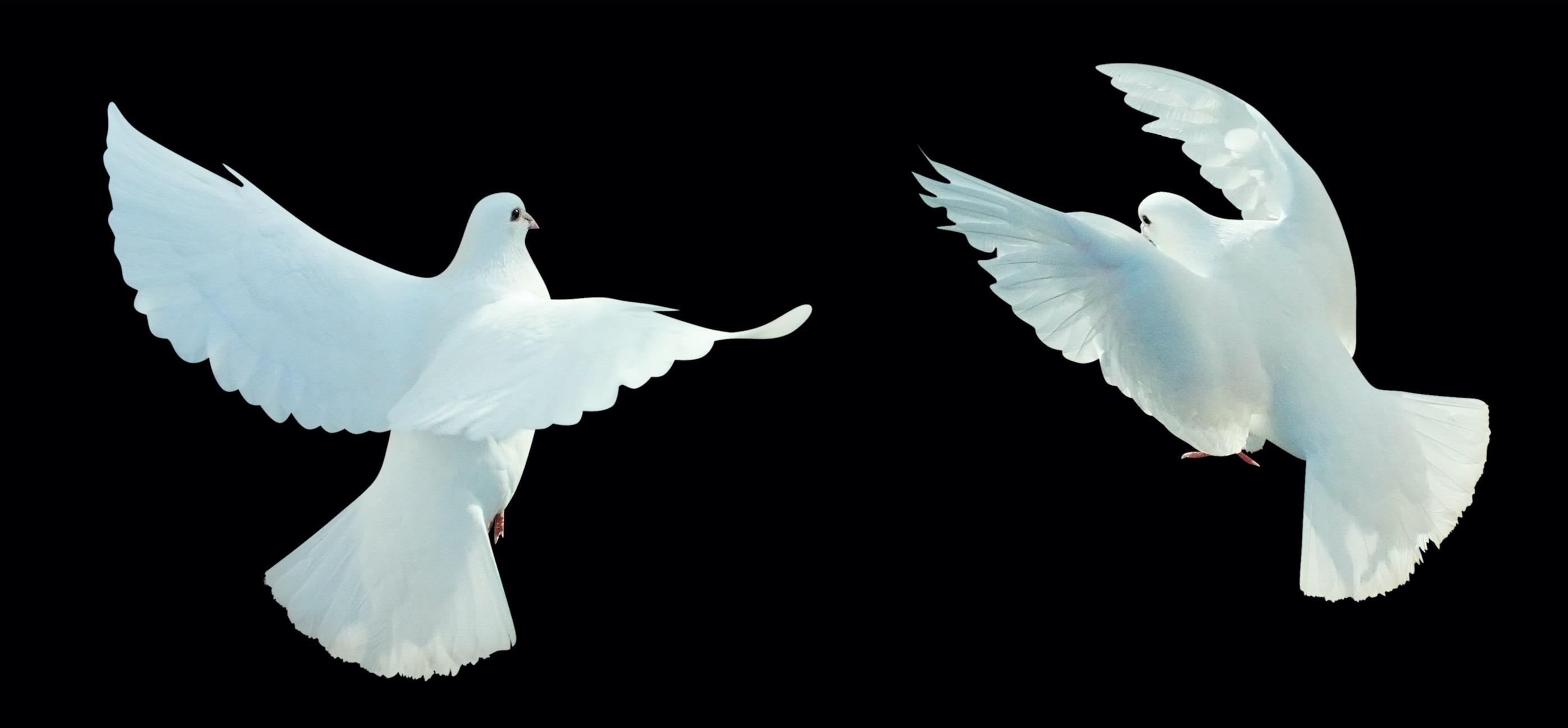 Von der Verletzung zur Vergebung – Eine wahre Geschichte