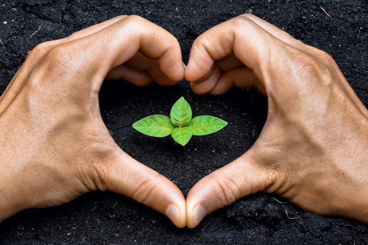 Was ist diese Liebe, die sich für die Heilung verantwortlich zeichnet? – Léonard Laskow