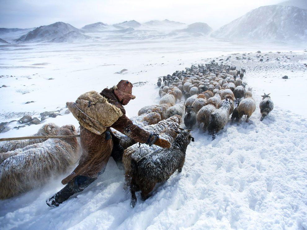 Eisige Kälte und grosse Not in der Mongolei