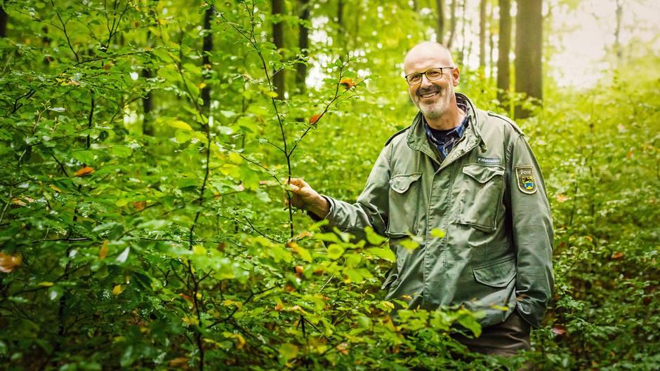 Das geheime Netzwerk der Natur – mit Peter Wohlleben