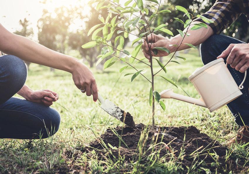 S'offrir du bien-être et planter des arbres – le calendrier de l'avent 'Les étincelles de Noël'