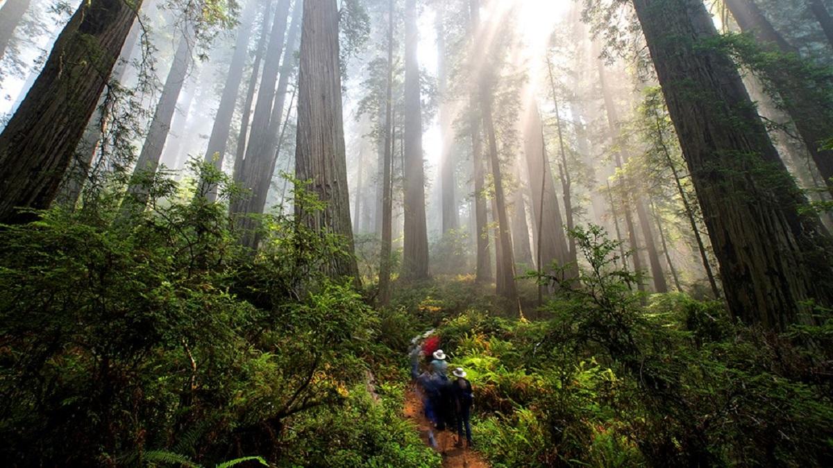 Die Lektion der Redwoods – Unsere wahre Kraft besteht im Willen, uns gegenseitig zu unterstützen