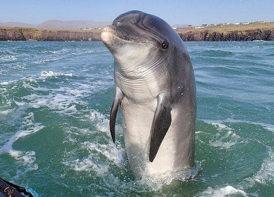 Sauvetage d'un dauphin