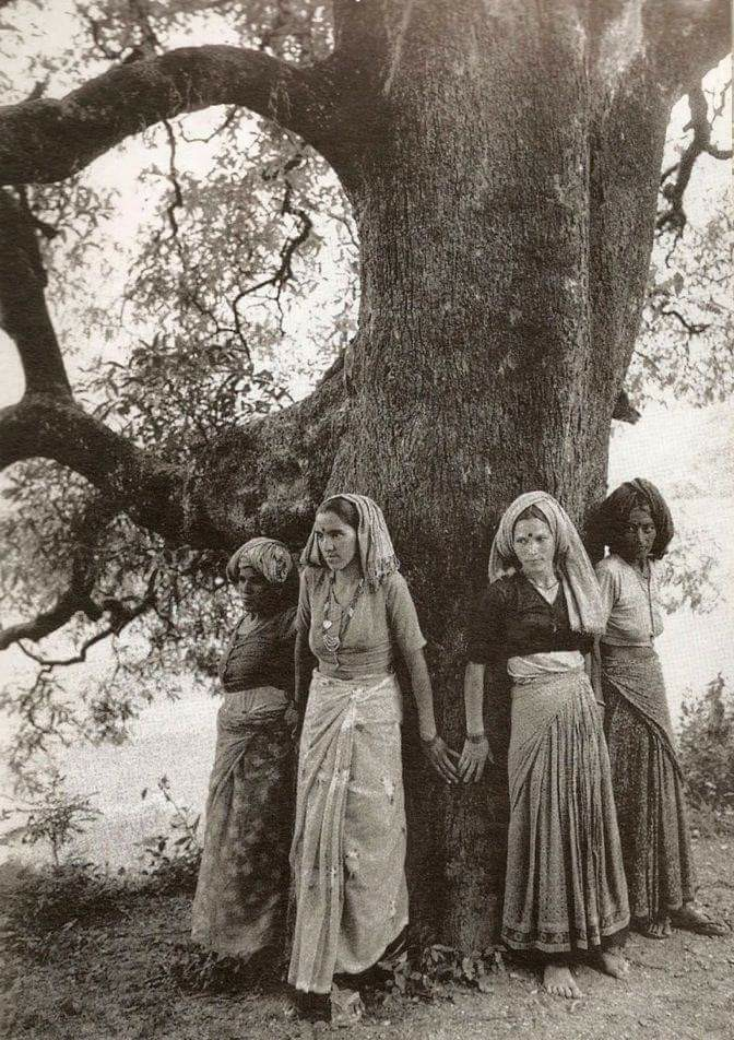 "The origin of the term ""Tree hugger"""