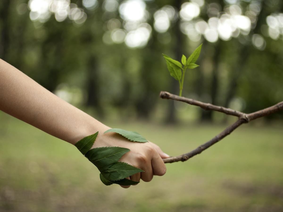 Umweltschutz ist nicht gleich Klimapolitik. Der grosse Unterschied, und was wir wirklich beachten müssen
