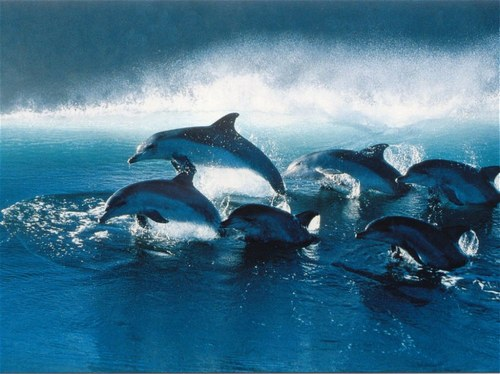 Vol au dessus des dauphins