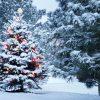 Weihnachten: Gott will, dass der Mensch Gott wird. Ein Auftrag an die Menschen