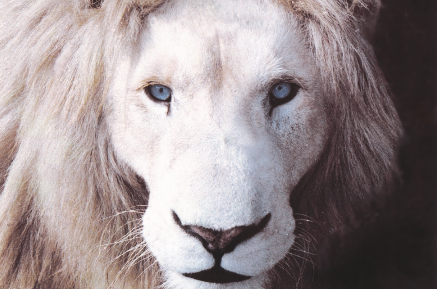 Global White Lion Trust