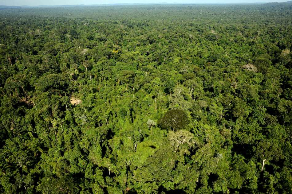 Hallelujah! Brazil court suspends decree allowing Amazon reserve mining.