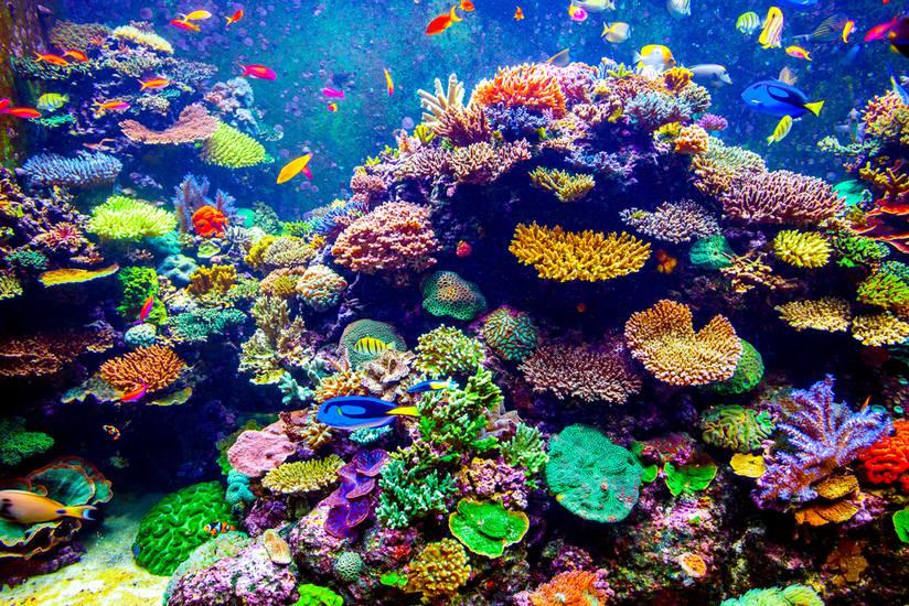 Zilooa, la marque Suisse de cosmétiques solaires coral-reefs friendly